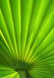 Fan Leaf Royalty Free Stock Photo