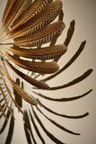 The fan made of colorful feathers. With deep shadows on a white background royalty free stock photo