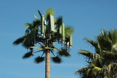Fan Palm Cell Tower Royalty Free Stock Photography
