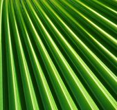 Fan shaped Palm leaf Royalty Free Stock Image