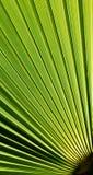 Fan shaped Palm leaf Stock Photography