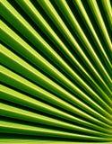 Fan shaped Palm leaf Stock Image