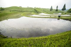 Fan shaped terraced paddy field. Which newly planted seedlings Royalty Free Stock Images