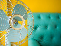 Fan sofa and yelloe wall Stock Photo