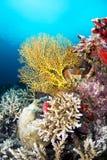 Fan tropical de Yellow Sea fotografía de archivo