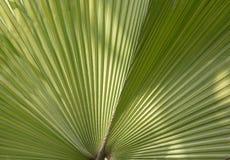Fan tropicale de feuille images stock