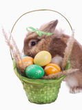 Fance rabbit and easter basket. Fancy rabbit and green basket with easter eggs isolated on white Royalty Free Stock Photos
