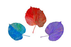 Fanciful colors of the autumn Royalty Free Stock Images