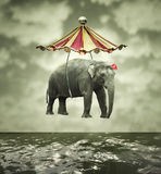 Fanciful elephant. Fanciful and artistic image that represent a flying elephant with circus tent above the water vector illustration