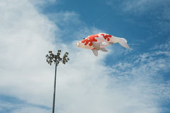 Fancy carp fish shaped kite flying in blue cloudy sky Royalty Free Stock Image