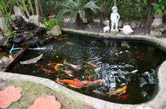 Fancy carp or Koi fish Royalty Free Stock Photos