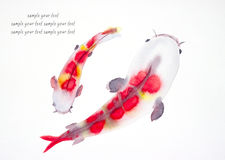 Fancy carp watercolor painted Stock Images