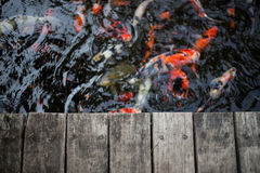 Fancy carps and splat Royalty Free Stock Images