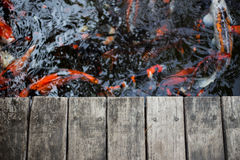 Fancy carps and splat Stock Image