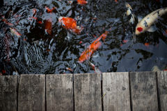 Fancy carps and splat Royalty Free Stock Image