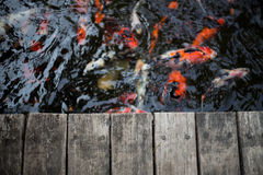 Fancy carps and splat. Fancy carps swimming in the water flow and splat Stock Photography