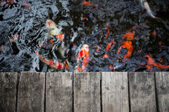 Fancy carps and splat. Fancy carps swimming in the water flow and splat Royalty Free Stock Photo