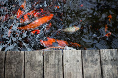 Fancy carps and splat. Fancy carps swimming in the water flow and splat Royalty Free Stock Image