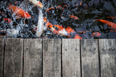 Fancy carps and splat. Fancy carps swimming in the water flow and splat Royalty Free Stock Photos