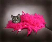 Fancy Cat Royalty Free Stock Images