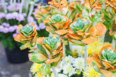 Fancy flowers Stock Photo