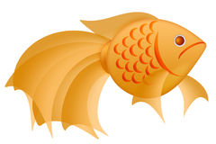 Fancy Goldfish Illustration Isolated on White Stock Images