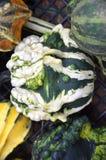 Fancy Gourd stock image