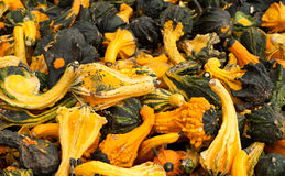 Fancy Gourds Royalty Free Stock Images