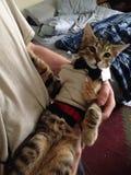 Fancy kitten royalty free stock images