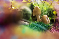 Fancy mushrooms Royalty Free Stock Image