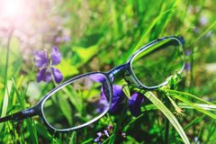 Fancy optometry glasses in green grass and violet flowers. Conceptual picture for poor vision or myopia treatment. Hipster glasses. In front of flower stock photo