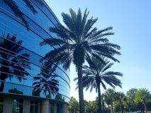 Fancy palm trees royalty free stock photos