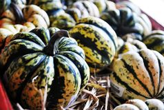 Fancy pumpkin Royalty Free Stock Photo
