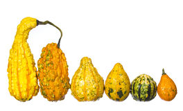 Fancy pumpkin collection isolated. Unusually shaped squashes Stock Photos