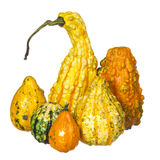 Fancy pumpkin collection isolated. Unusually shaped squashes Royalty Free Stock Image