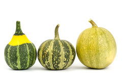 Fancy pumpkin Stock Image