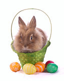 Fancy rabbit in the basket Stock Photography