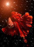Fancy red  Betta or Saimese fighting fish. Royalty Free Stock Image