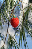 Fancy red strawberry xmas ornament in a pine tree Stock Photos
