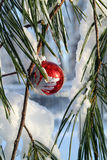 Fancy red xmas ball in a pine tree. Fancy red Xmas ball ornament on a snowy pine branch Royalty Free Stock Images