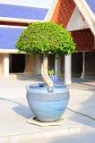 Fancy shaped decorative tree Stock Photo