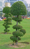 Fancy shaped decorative trees with button mushroom like canopy Stock Photos