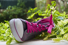 Fancy sneaker with the pink laces in green grass Royalty Free Stock Photo