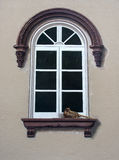 Fancy window design Stock Image