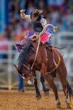 Fanfarrões do vaqueiro do mistério no mustang selvagem no rodeio de Florida fotos de stock royalty free
