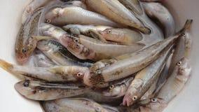 Fang des Fischers Lizenzfreie Stockfotos