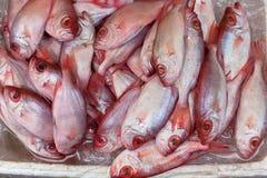 Frische Fische am lokalen Markt Lizenzfreie Stockbilder