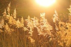 Fangen des Sonnenlichts Stockfotos
