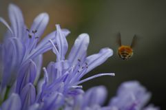Fangen eines Fliegeninsekts Lizenzfreies Stockfoto