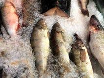 Fangen Sie den Fisch, der zu Ihnen schwimmt Fragment vom Fischspeicher Lizenzfreie Stockfotografie